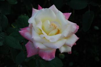2006_11010084
