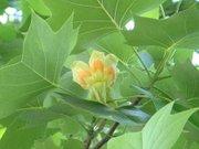 Flower8_201large